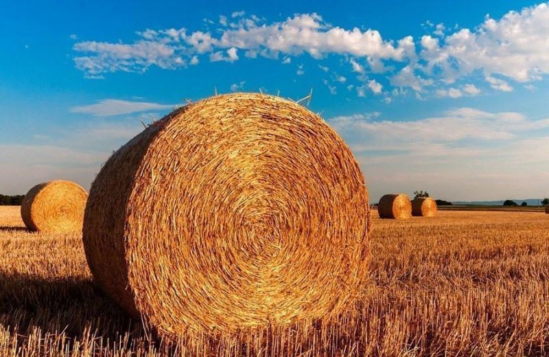Производство сельхозпродукции сократилось за 8 месяцев на 5,5%, выросло производство молока, скота и птицы