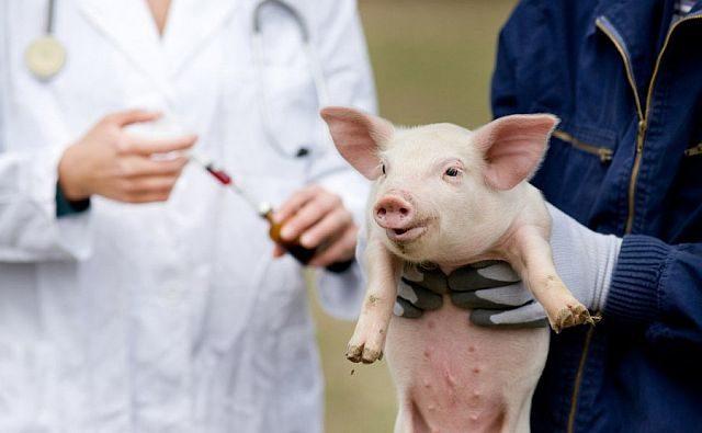 В Ростовской области с начала года с рынков изъяли 165 тонн опасного мяса